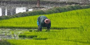 ರಾಜ್ಯ ಬಜೆಟ್: ಕೃಷಿ ವಲಯಕ್ಕೆ ಬಂಪರ್ ಕೊಡುಗೆ