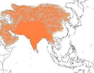 ಮಧ್ಯಪ್ರಾಚ್ಯ-ಯುರೋಪ್ ಕಡೆಗೆ ಹಬ್ಬದ ಭಾರತೀಯ ಸಾಮ್ರಾಜ್ಯಗಳು : ಕಾರಣಗಳೇನು?